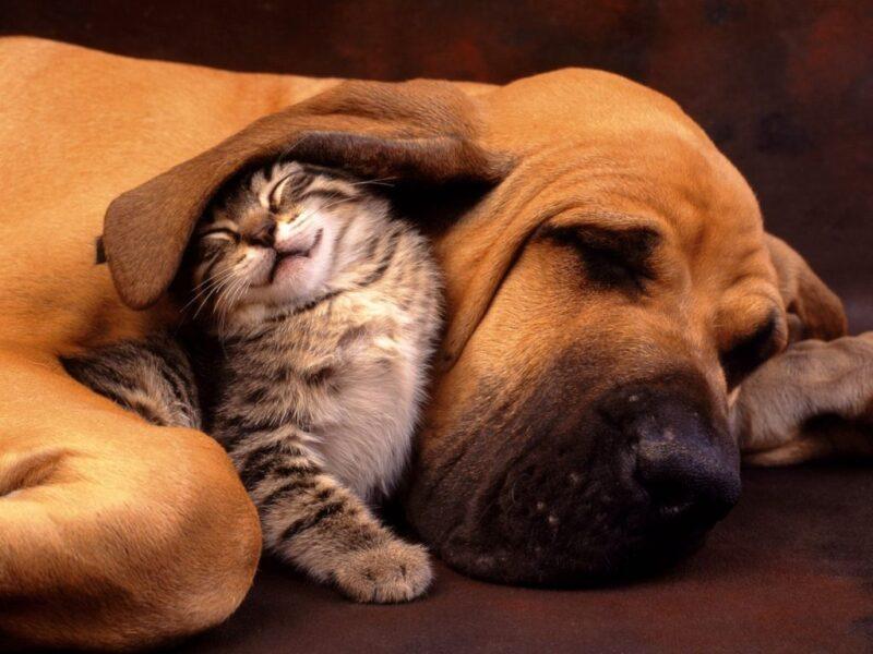 Popolare Cane e gatto - Bambini - Wikitesti ST78