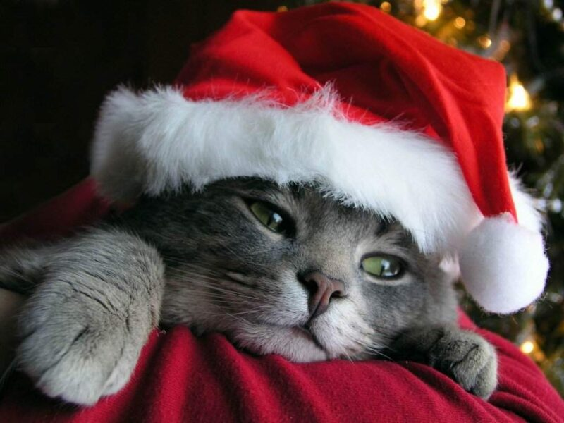 Canzone Di Natale Buon Natale.Buon Natale Wikitesti
